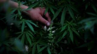 【3306】日本製麻!大麻関連銘柄として注目!?