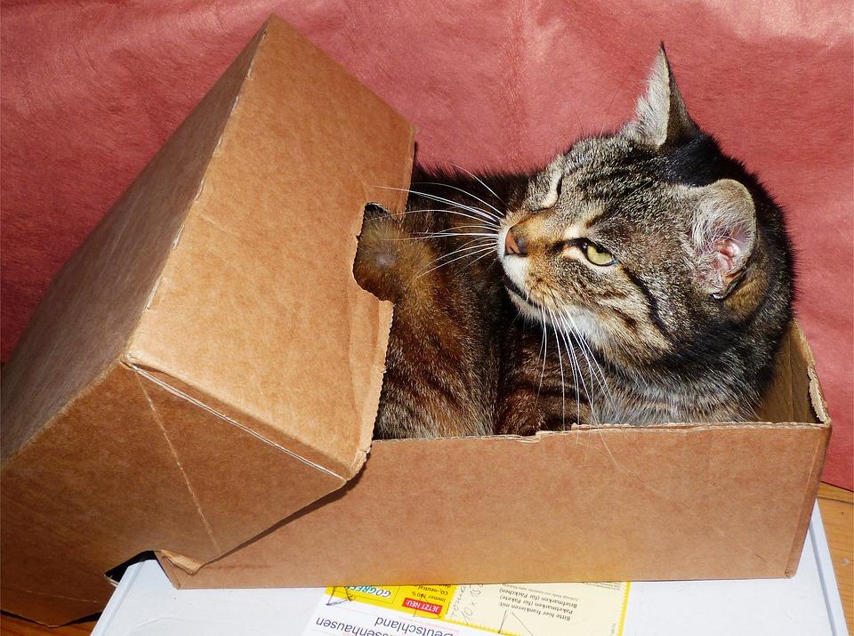 cat-1529520_960_720