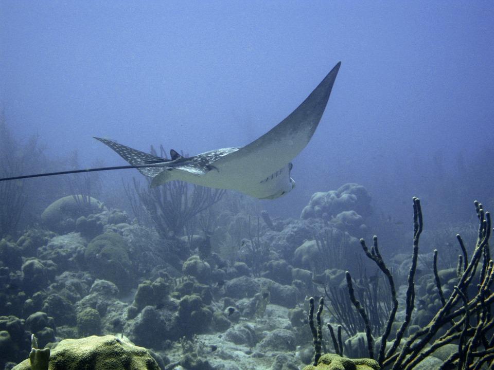 underwater-101368_960_720